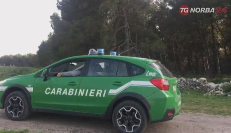 Xylella, sequestro di piantine ad Ostuni